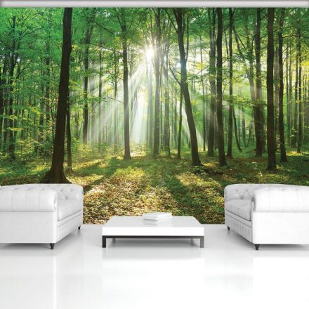 Wall mural Light Green summer forest